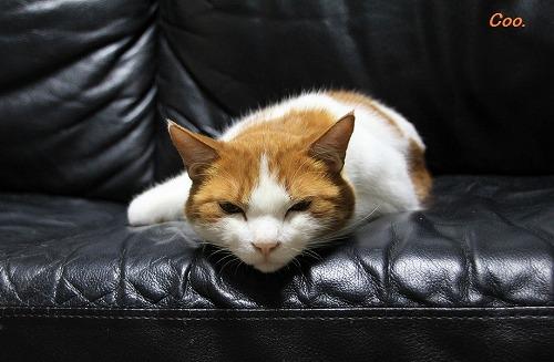 ブログNo.57(疲れきった猫)1