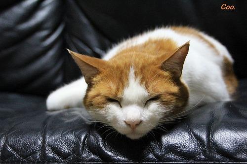 ブログNo.57(疲れきった猫)2