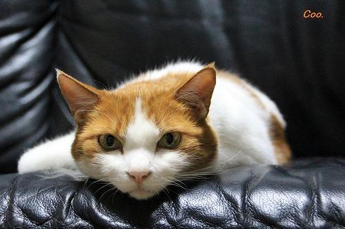 ブログNo.57(疲れきった猫)3