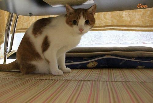 ブログNo.57(疲れきった猫)7