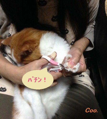 ブログNo.47(嫌な予感)7