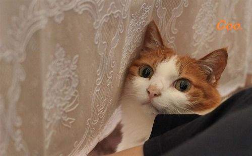 ブログNo.43(可愛いという言葉が嫌いな猫)1