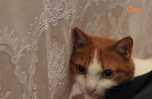 ブログNo.43(可愛いという言葉が嫌いな猫)2