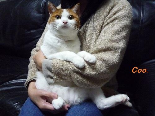 ブログNo.43(可愛いという言葉が嫌いな猫)6