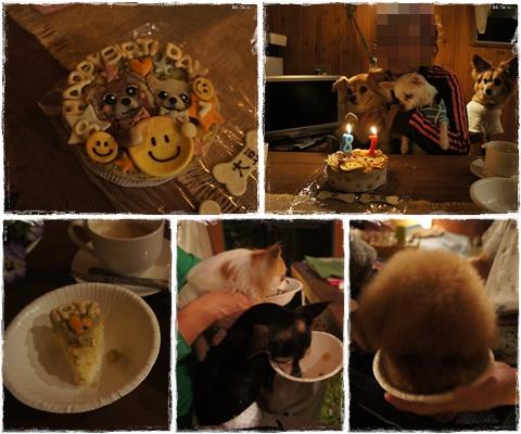 cats_20130502120403.jpg