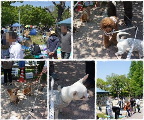 cats_20130504185404.jpg