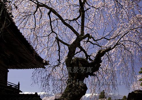 蔵澤寺と中央アルプス