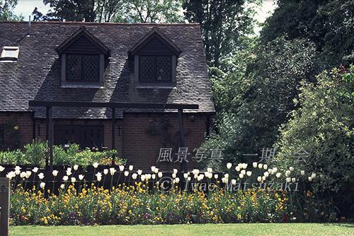 チューリップのある家