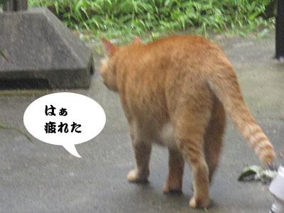 13_08_05_4.jpg
