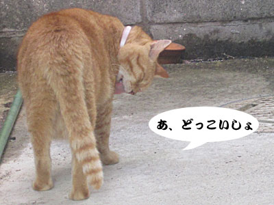 13_08_05_5.jpg