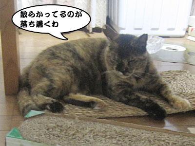 13_08_18_5.jpg