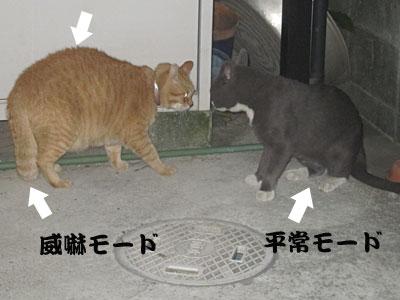 13_08_21_5.jpg