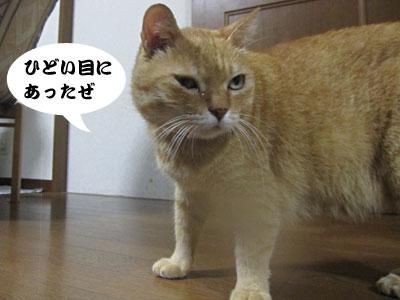 13_08_26_4.jpg