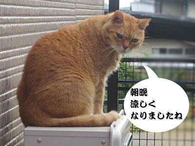 13_08_28_1.jpg