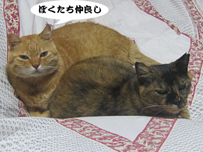 13_09_08_1.jpg