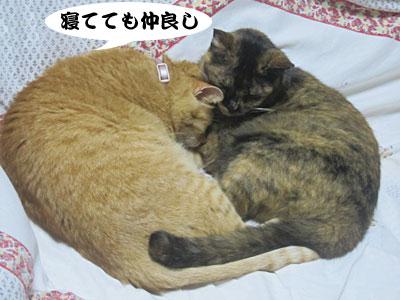 13_09_08_2.jpg