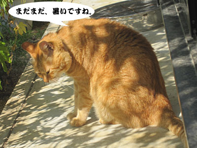 13_09_11_2.jpg