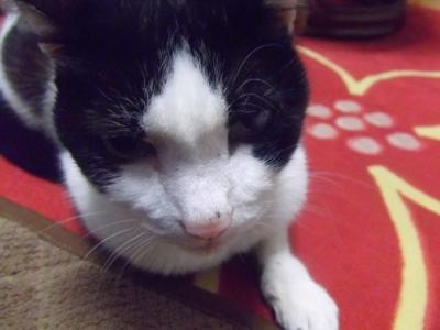 実家の愛猫19歳!