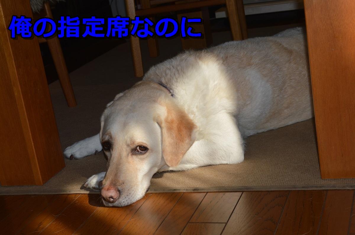DSC_0560-018.jpg