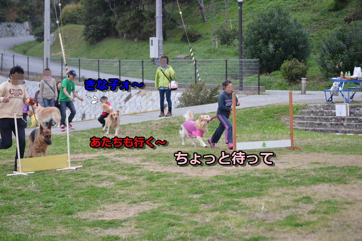 DSC_1511-001.jpg
