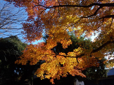 photo_randner_edogawa_18_kouyou_2013_1130.jpg