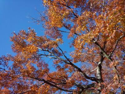 photo_randner_edogawa_19_kouyou_2013_1130.jpg