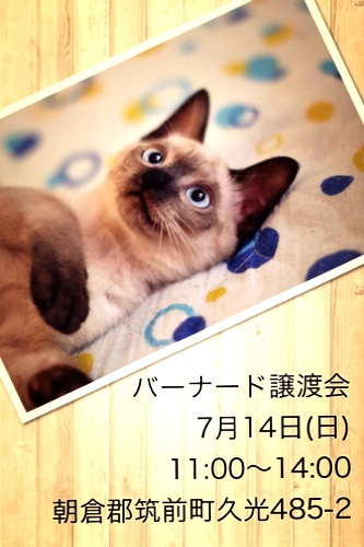 fc2blog_20130714014633b56.jpg