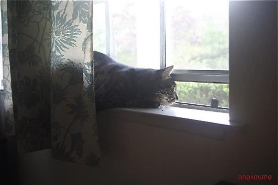 愛しの黒猫ちゃん4
