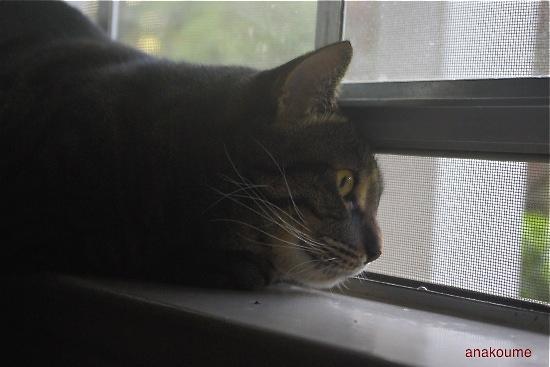 愛しの黒猫ちゃん7