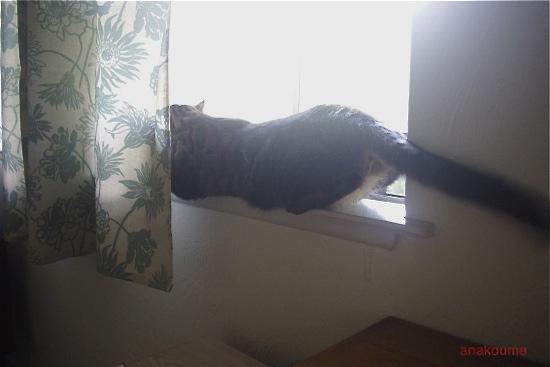 窓辺で寛ぐ1