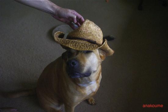 アナベラと麦わら帽子1