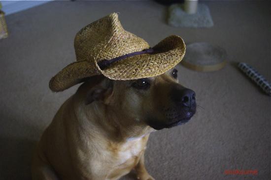 アナベラと麦わら帽子4