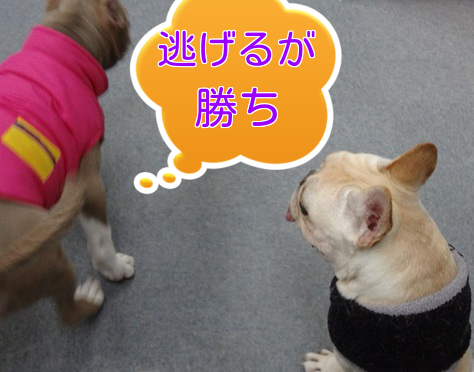 20140121200926c14.png