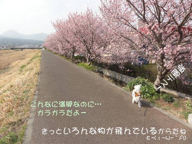 2013031004.jpg