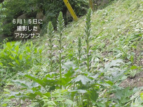 20130615b1.jpg