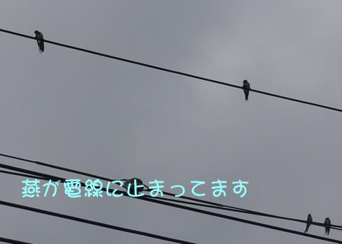 201306193.jpg