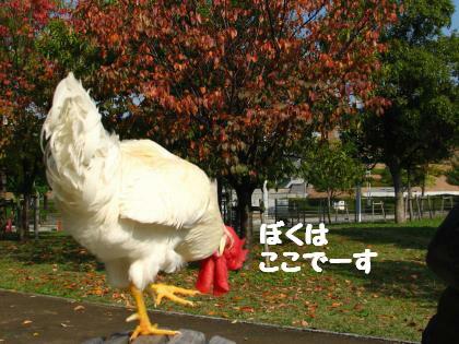 ni-96_20131116214648eb8.jpg