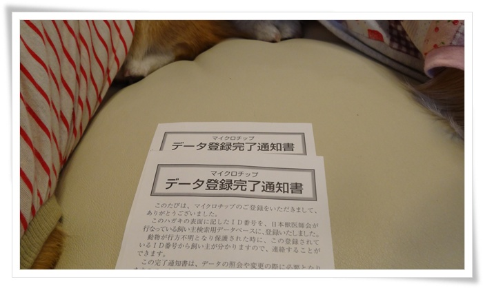 DSC04411.jpg