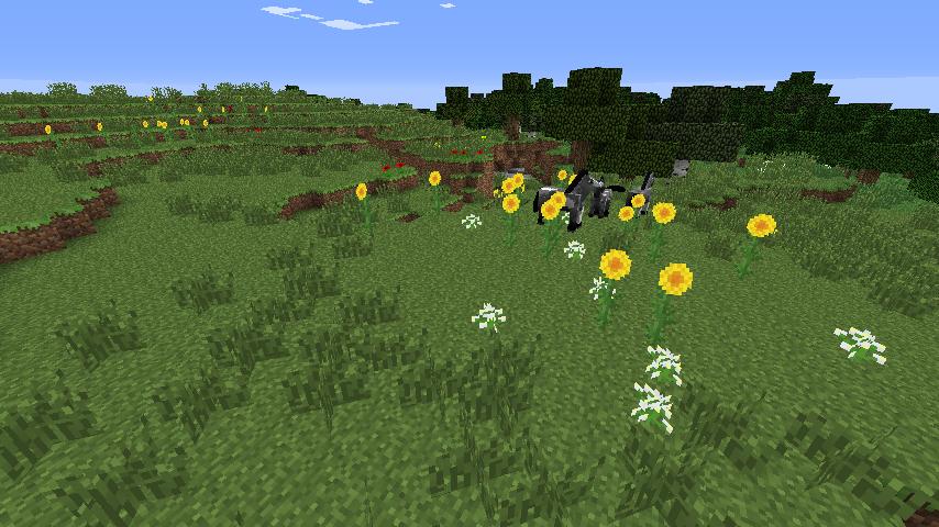 Sunflower Plains