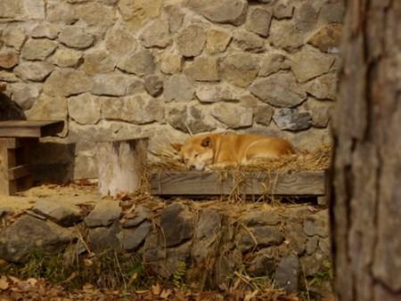 リュウちゃんと藁の寝床