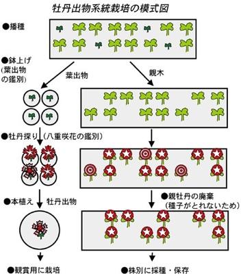 fc2blog_20130815103933821.jpg