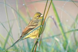 bird_nojiko.jpg