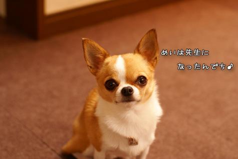 DSC049701227.jpg
