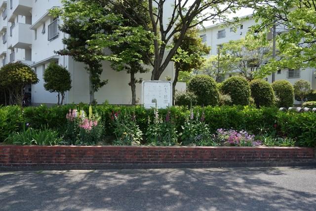 公団美室団地の花壇