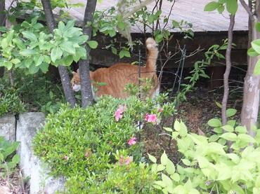 お隣さんの庭で