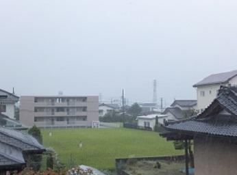 雨の田んぼ