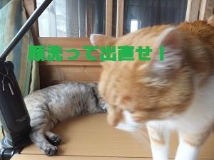 9_20130603170118.jpg