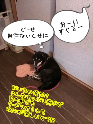 2013112121562180c.jpg