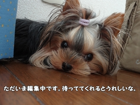 DSC011792.jpg