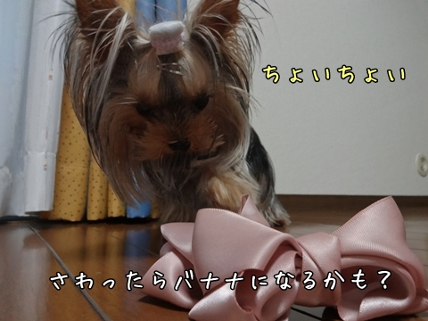 DSC01349.jpg